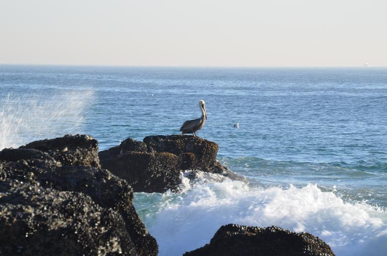 Лучший пляж Южной Калифорнии