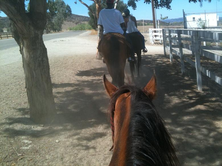 Катание на лошадях по долине виноделия в Калифорнии