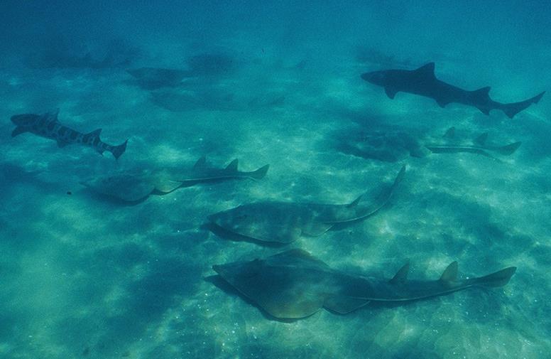 Каякинг среди акул и скал в La Jolla