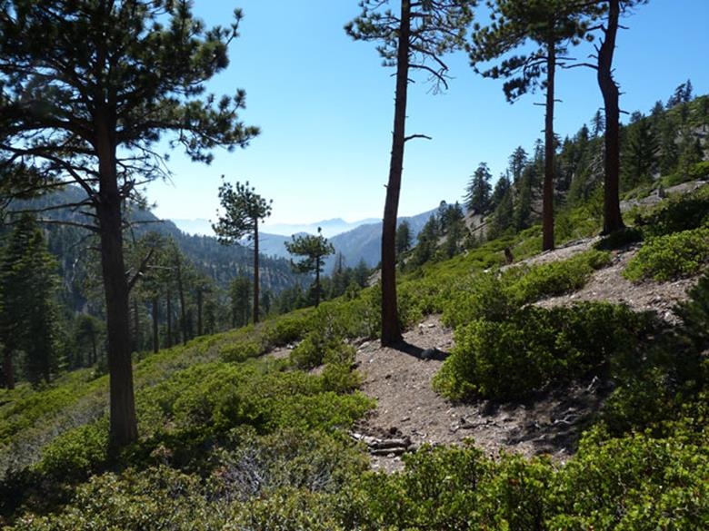 Mount Timber