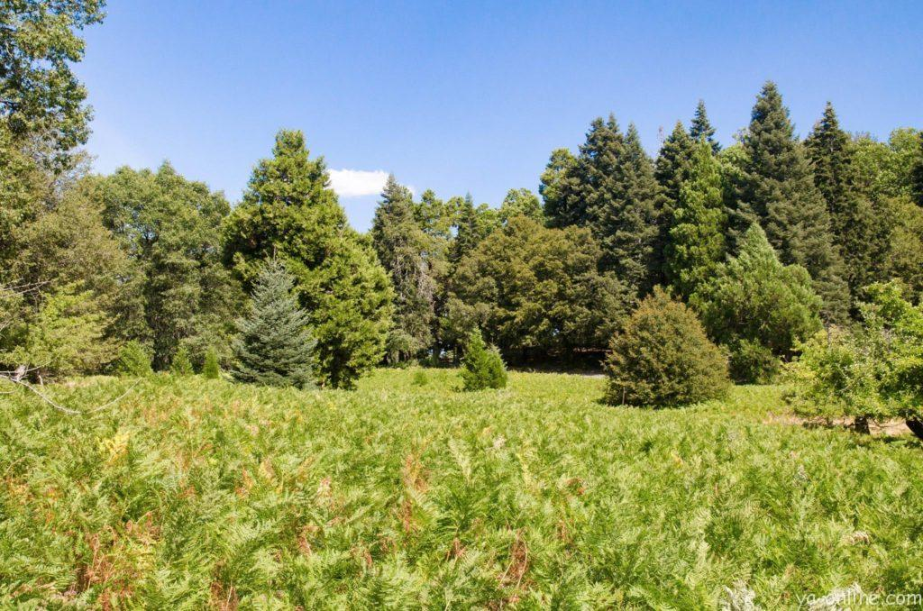 Парк Palomar Mountain