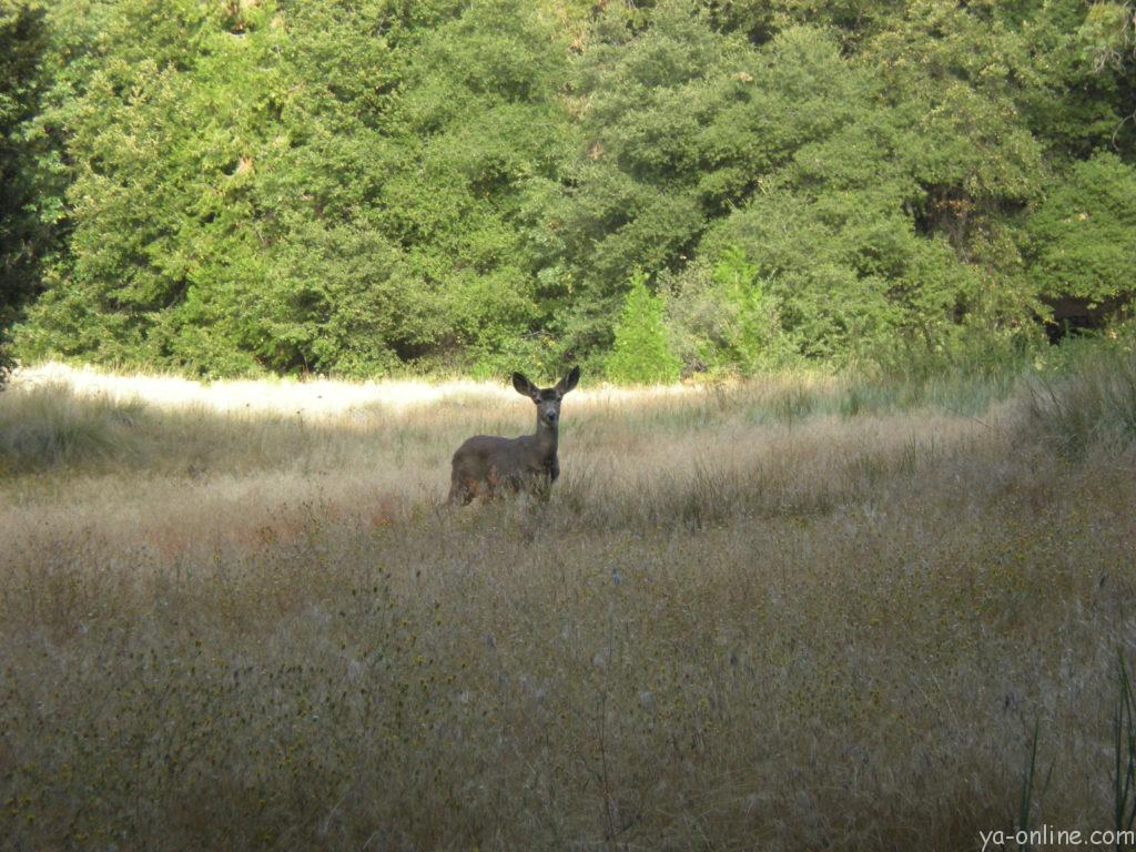 Palomar Mountain Park